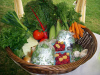 basket with organic produce